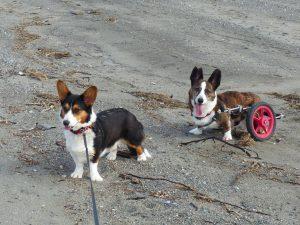 Sadie & Oliver, the author's Cardigans